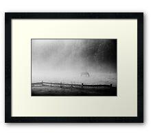 a horse in the fog Framed Print