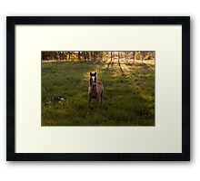 the horse and the sunset Framed Print
