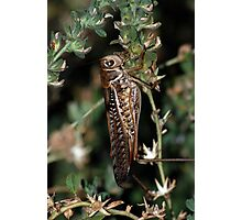 Locust Photographic Print