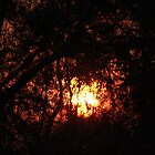 Fiery Sunset Through The Eucalypts by Stuart Daddow Photography