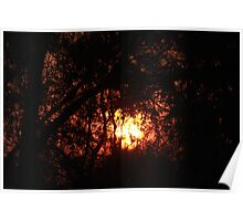 Fiery Sunset Through The Eucalypts Poster