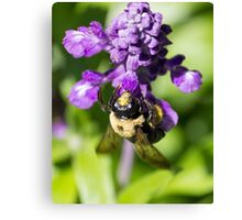 Bee 5 Canvas Print