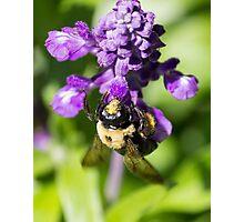 Bee 5 Photographic Print