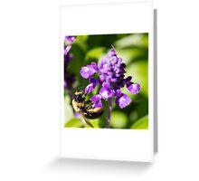 Bee 6 Greeting Card