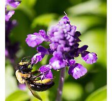 Bee 6 Photographic Print