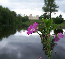 Castle Lake Hereford Flower Macro by Connor Bartlett