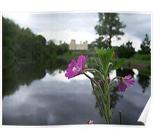 Castle Lake Hereford Flower Macro Poster