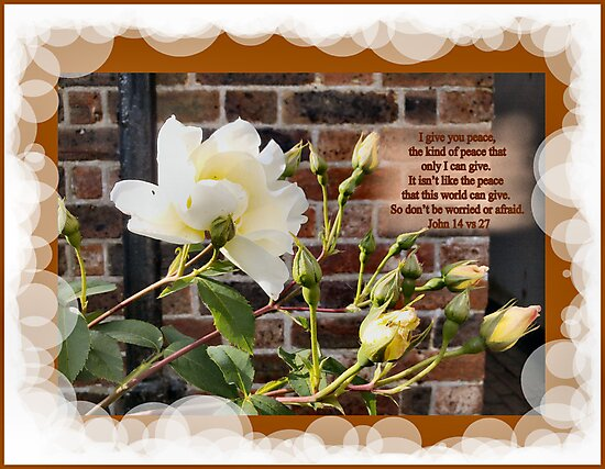 WHITE ROSES WITH WALL (BIBLE VERSE) by Shoshonan