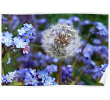 Dandelion and Forget-Me-Nots Poster