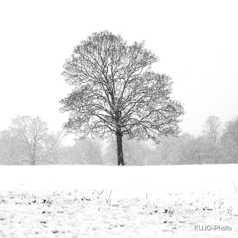 Solitude by KUJO-Photo
