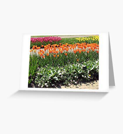 Colourful Tulips in the Keukenhof Gardens  Greeting Card