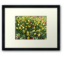 Random Mixture - Tulips in the Keukenhof Framed Print