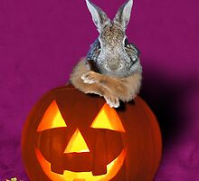 Halloween Bunny Rabbit by jkartlife
