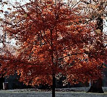 Red tree by RayaCottrell