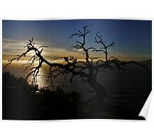 StarLight Tree at Sunset Poster