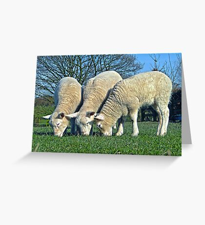 The 3 Woolly Jumpers Greeting Card