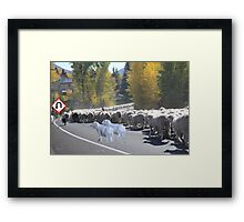 """Whadda ya mean you want to go back…..can't you read the sign????  It says 'No Ewe Turn"""" ! Framed Print"""