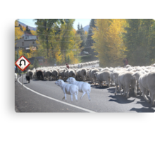 """Whadda ya mean you want to go back…..can't you read the sign????  It says 'No Ewe Turn"""" ! Metal Print"""