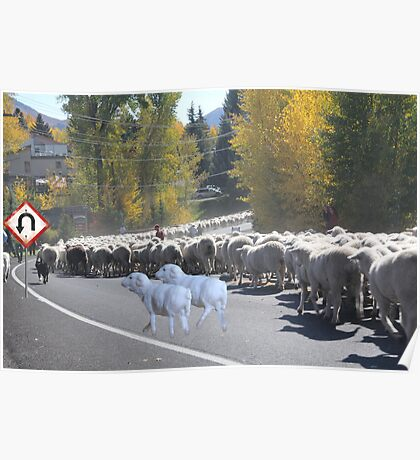 "Whadda ya mean you want to go back…..can't you read the sign????  It says 'No Ewe Turn"" ! Poster"