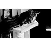 How Cats Relax Photographic Print