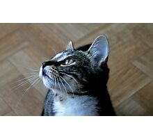 Whiskers on Kittens Photographic Print