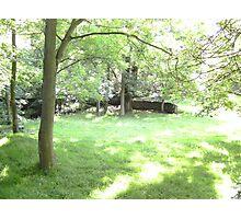 Leafy Glade Photographic Print
