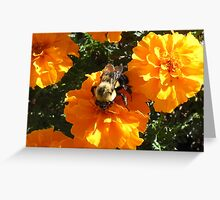 Bumble Bee on a Flower Greeting Card