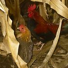 Roosters in a Corn Field by TCbyT