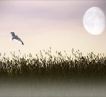 ABOVE THE TALL GRASS by TOM YORK