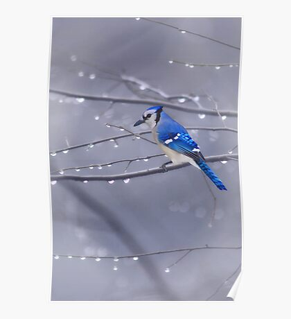 BLUE JAY IN THE RAIN Poster