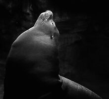Fur Seal by Lee LaFontaine