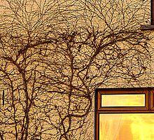 Corner Window by Fara