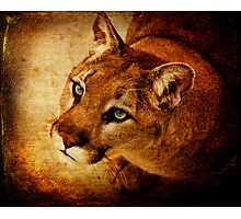 Panther Prayer Photographic Print