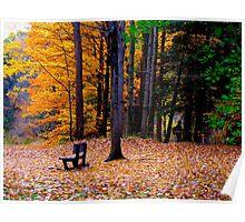 Leaf gaze Poster