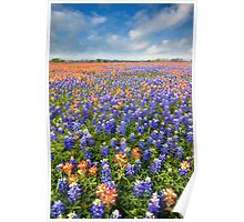 Bluebonnet Field near Whitehall, Texas Poster