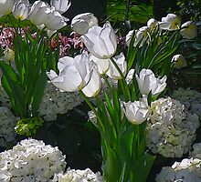 White Tulips in the Conservatory by Betty Mackey