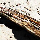 Driftwood by Ashley Løseth