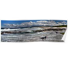 Sea birds@beach-pano Poster