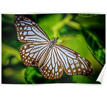 Blue butter fly Poster