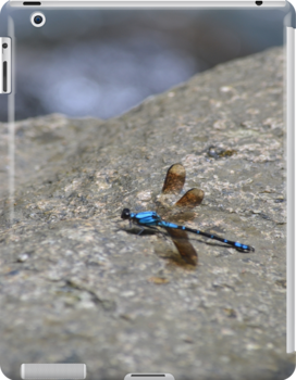 Blue Dragonfly by Jess Jones