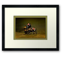 Naughty flies 01 Framed Print