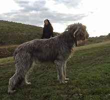 Irish Wolfhound Roisin by Mandy Fransz