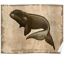North Atlantic Right Whale Poster