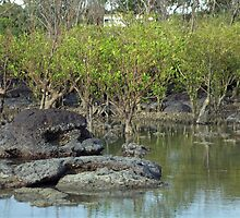 Mangroves Of Nightcliff by Brinjen