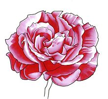 Pink Rose - Promarkers by Gee Massam