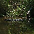 Gator Out of it's Condo by George  Link