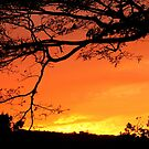 Spectacular Sunset by Laurel Talabere