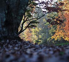 Down the Country Road in October by karineverhart
