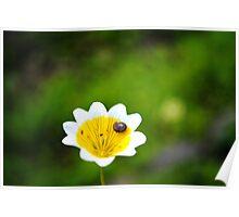 Little Snail Poster