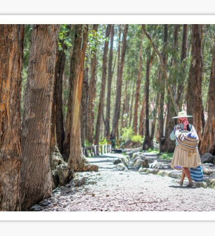 Cholita among the Eucalyptus Trees Sticker